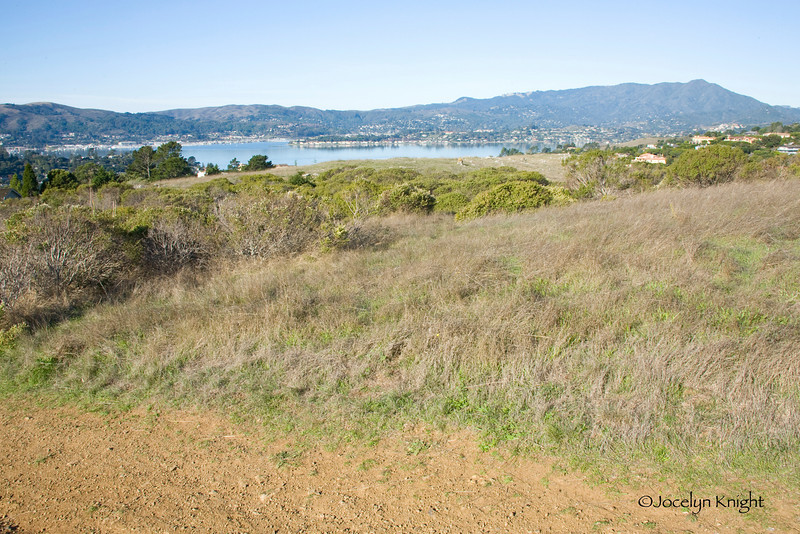 Martha 5225 - Looking Northwest toward Richardson Bay and Mt. Tamalpais, with Strawberry Point and Mill Valley in the far distance, Sausalito on the left. Site of 4 proposed 8,000 to 10,000 sq.ft. homes.