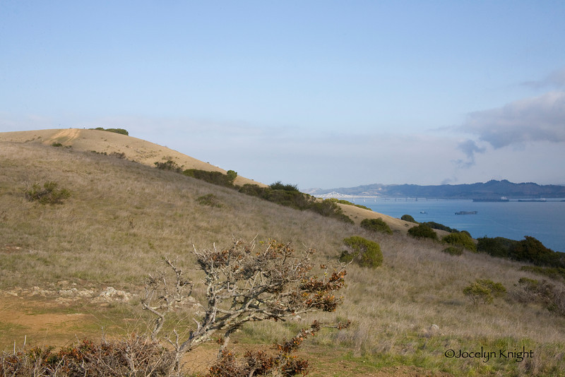 """Martha 8368 - Looking North, North-east toward the San Rafael-Richmond Bridge from Founder's Rock at the Southern-most point of the Tiburon Peninsula on the Tiburon Ridge and property privately owned and known as """"The Martha Property."""" This property has been approved by the County for  32   homes ranging in size from 8,000-10,000 sq ft."""