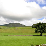 Pen-y-Ghent & Trees
