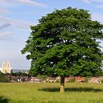 Beverley Westwood Tree & Minster
