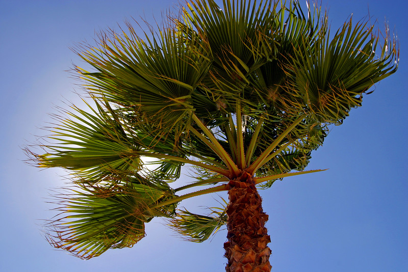 Algarve Tree