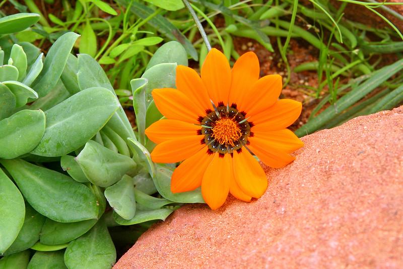 Eden plant, 29-3-2006 (IMG_5437) Max