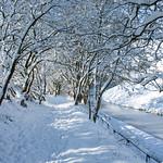 Marsden Canal Side Snow Walk