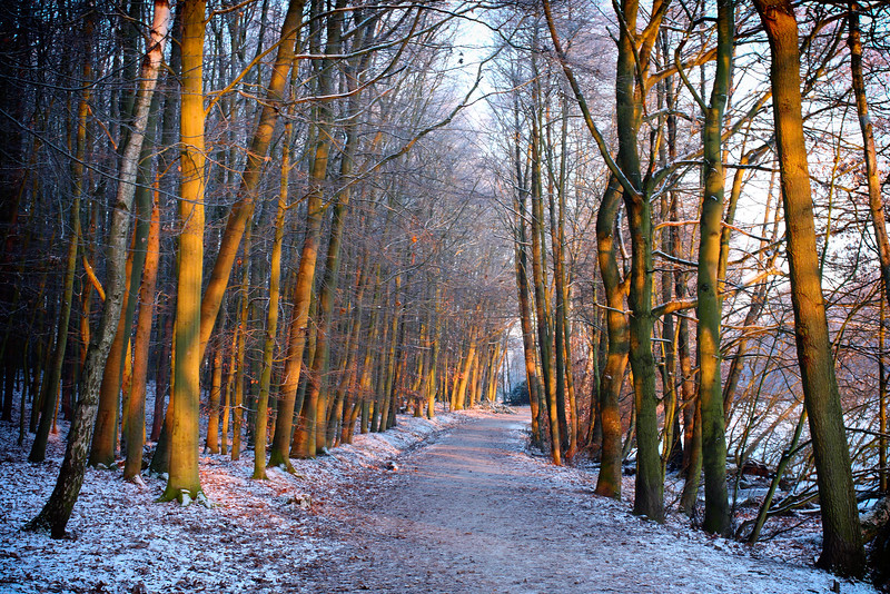 Newmillerdam Tree Walk