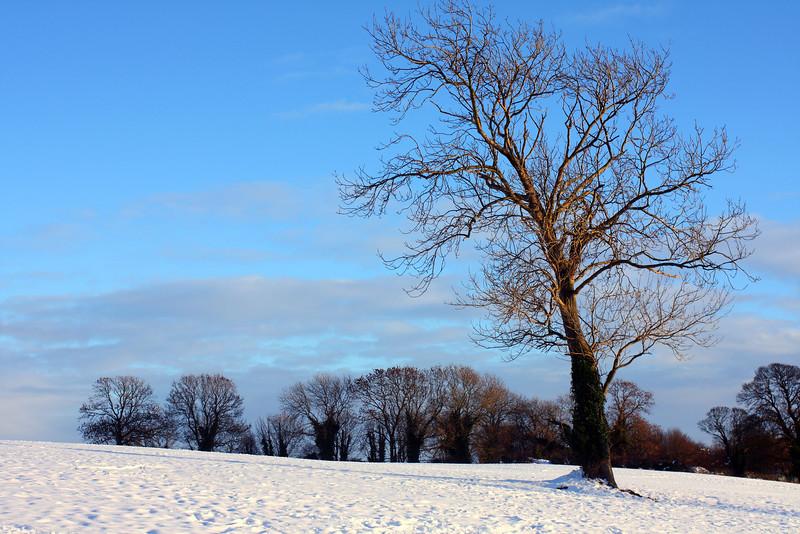 Rookeries Tree