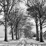 The Rookeries in Snow