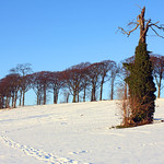 Rookeries Hill in Snow