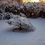 Acer, 22-1-2013 (IMG_1304) 4k