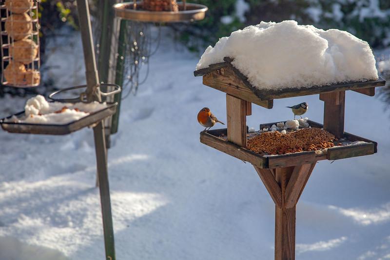 Robin & Blue Tit on Bird Feeder at home, 22-1-2013 (IMG_1400) 4k
