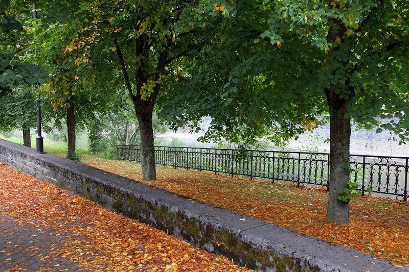 Trees on Avenue Louis de Loncin, Durbuy
