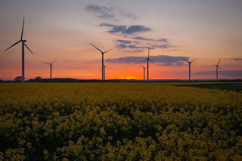 Lissett Wind Farm & Oil Seed Rape Field, 26-5-2013 (IMG_3131) 4k