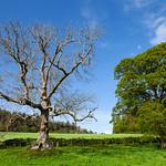 Restormel Trees, 9-5-2014 (IMG_9761) 4k