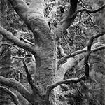 Cairndow Tree, 23-2-2014 (IMG_8506) 4k