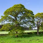 Restormel Trees, 9-5-2014 (IMG_9760) 4k