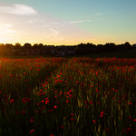 Poppy Field Sunset, 16-6-2014 (IMG_0736) 4k