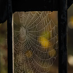 Dew Web, Knaresborough