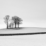 Horton-in-Ribblesdale Trees