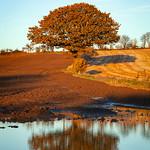 Ackworth Tree Reflection