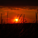Grimethorpe - Sunset and tall grass, 16-7-2019 (IMG_0294) 4k