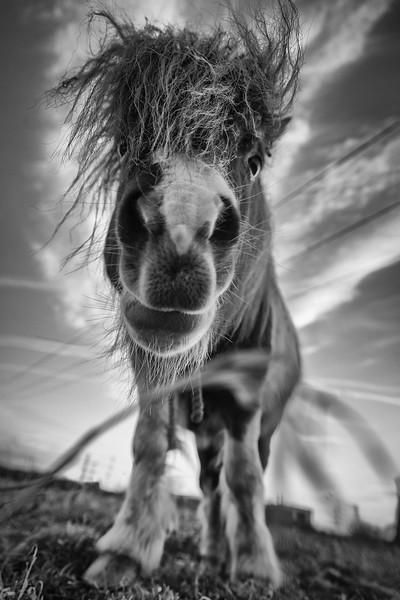 Pony at Ferrybridge
