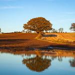 Ackworth Trees Reflection