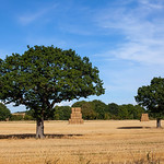 Ackworth Trees (Purston Lane), 13-9-2019 (IMG_2367) 4k