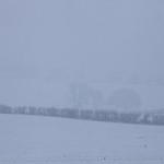 Grimethorpe - Manor Farm, 2-1-2021 (IMG_1143) 4k