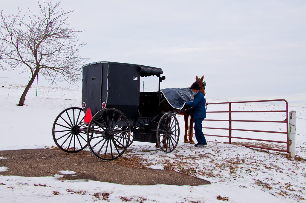 AMISH GENTLEMAN COVERING HORSE