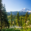 442  G Rainier Bear Grass and Eunice Lake