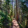 619  G Sunny Forest Trail