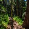 623  G Sunny Forest Trail V