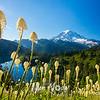 449  G Bear Grass Rainier and Eunice Lake