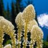 606  G Bear Grass and Eunice Lake