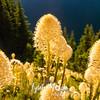 450  G Bear Grass