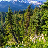 440  G Rainier and Bear Grass V