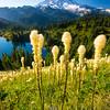 561  G Bear Grass and Rainier V
