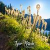 447  G Bear Grass Eunice Lake and Trail