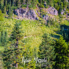 409  G Hillside Bear Grass