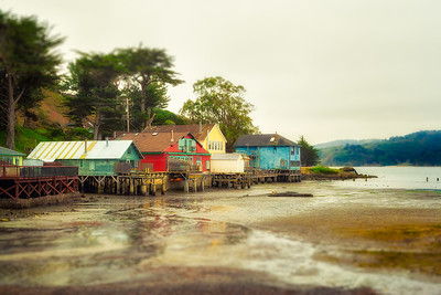 Low Tide on Tomales Bay