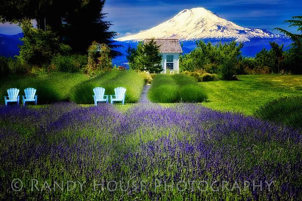 Hood River Lavender Farm with Mt Adams