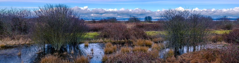 Boundary Bay Winter Pond