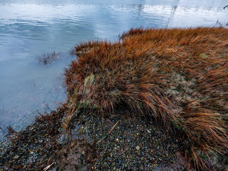 Seagrass Kiwi