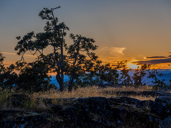 Garry Oak Sunset