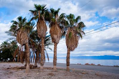 Abandoned Palms