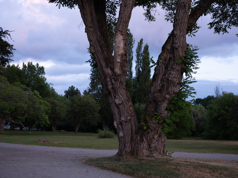The Path and Trunk Diverge