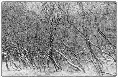 Moore Park Ravine  west of the Brickworks  December 30, 2012