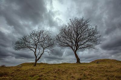 Træer på Slaggaard Banke en vinterdag