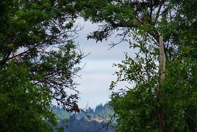 View between trees across the river.  Handheld 1200