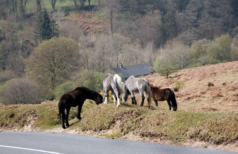 This photo was taken in Dartmoor Devon