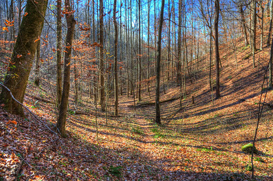 Millennium Trail at Edgar Evins State Park, Tennessee